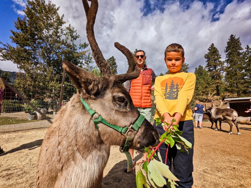 Taylor Family feeding reindeer at Reindeer Farm Leavenworth Washington 5