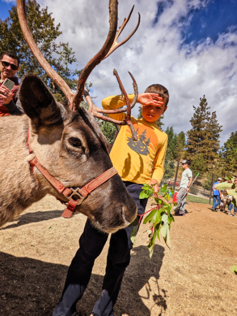 Taylor Family feeding reindeer at Reindeer Farm Leavenworth Washington 6
