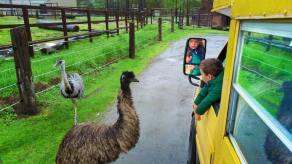 Taylor Family on tour bus at Wildlife Safari Winston Oregon 8
