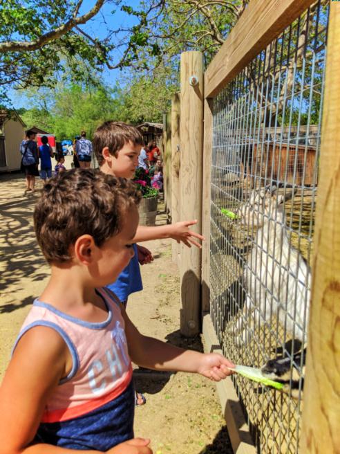Taylor Family with Goats at Avila Valley Barn Central Coast California 3