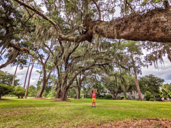 Taylor Family with Live Oaks and Moss at Kings Park on St Simons Island Golden Isles Georgia 1