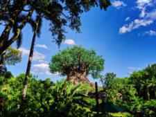 Tree-of-Life-Disneys-Animal-Kingdom-Disney-World-Orlando-Florida-1-225x169.jpg