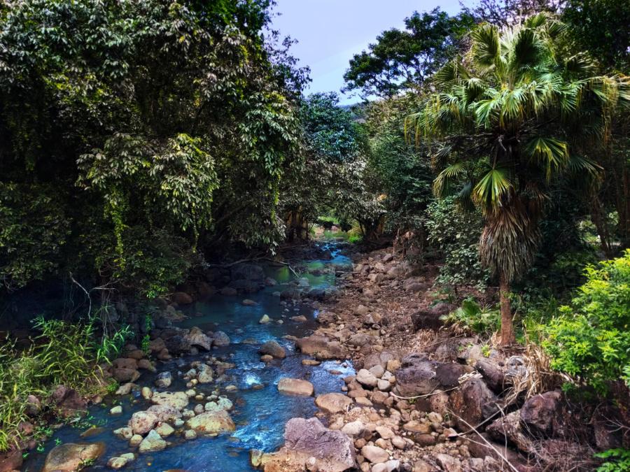 Tropical jungle creek at Waimea Valley North Shore Oahu 1