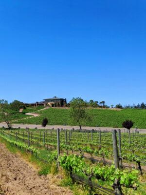 Vineyard rows at Presqu'ile Winery Santa Maria Valley California 2