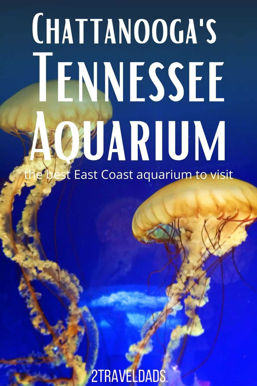 The Tennessee Aquarium in Chattanooga is the best zoo/aquarium on the East Coast. Tips for visiting with kids, special exhibits and more