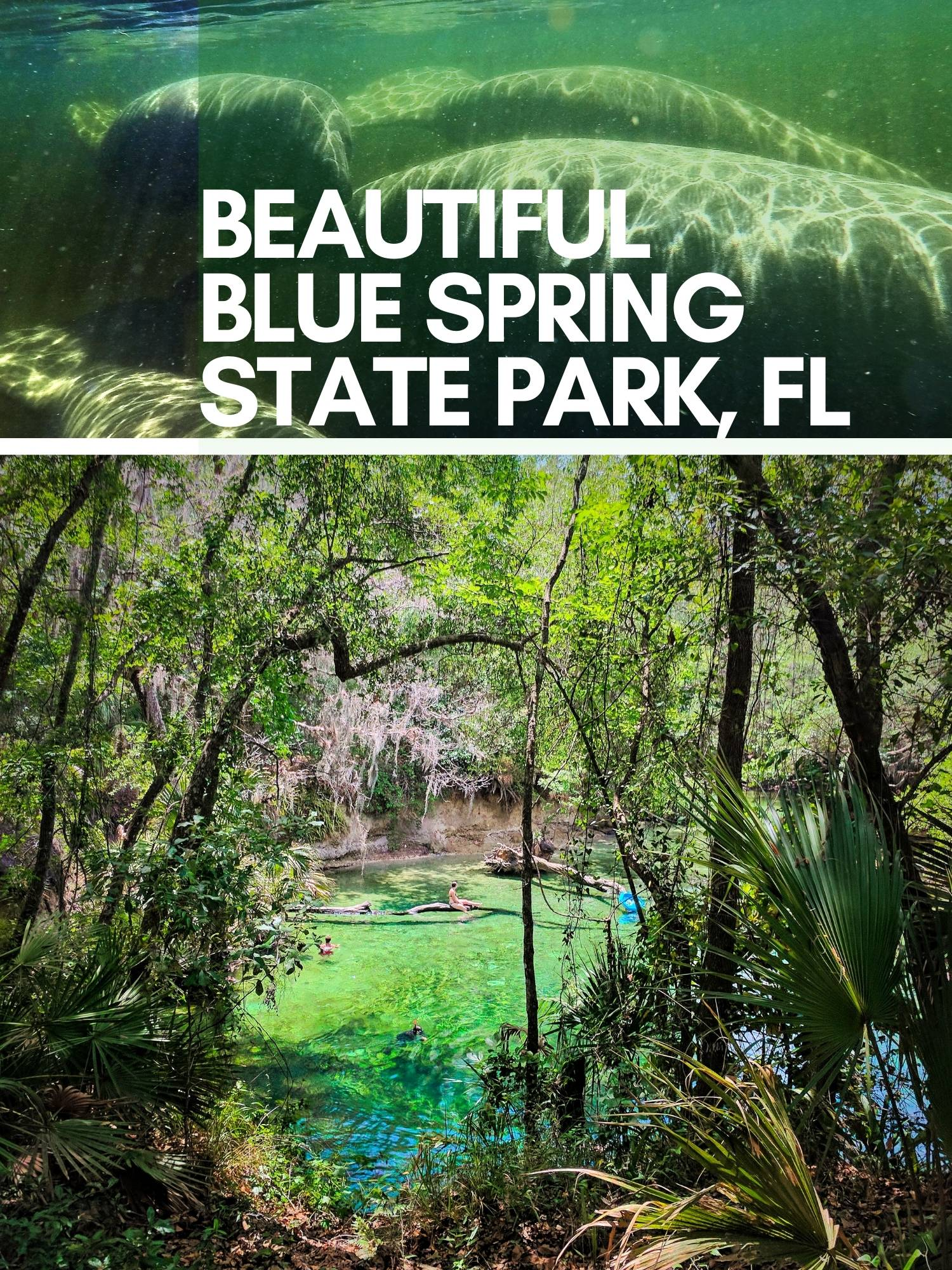 Everything you need to know about Blue Spring State Park, seeing manatees in Florida and swimming in the most beautiful Florida spring water. Things to do, how to get there, and rules for paddling with manatees.
