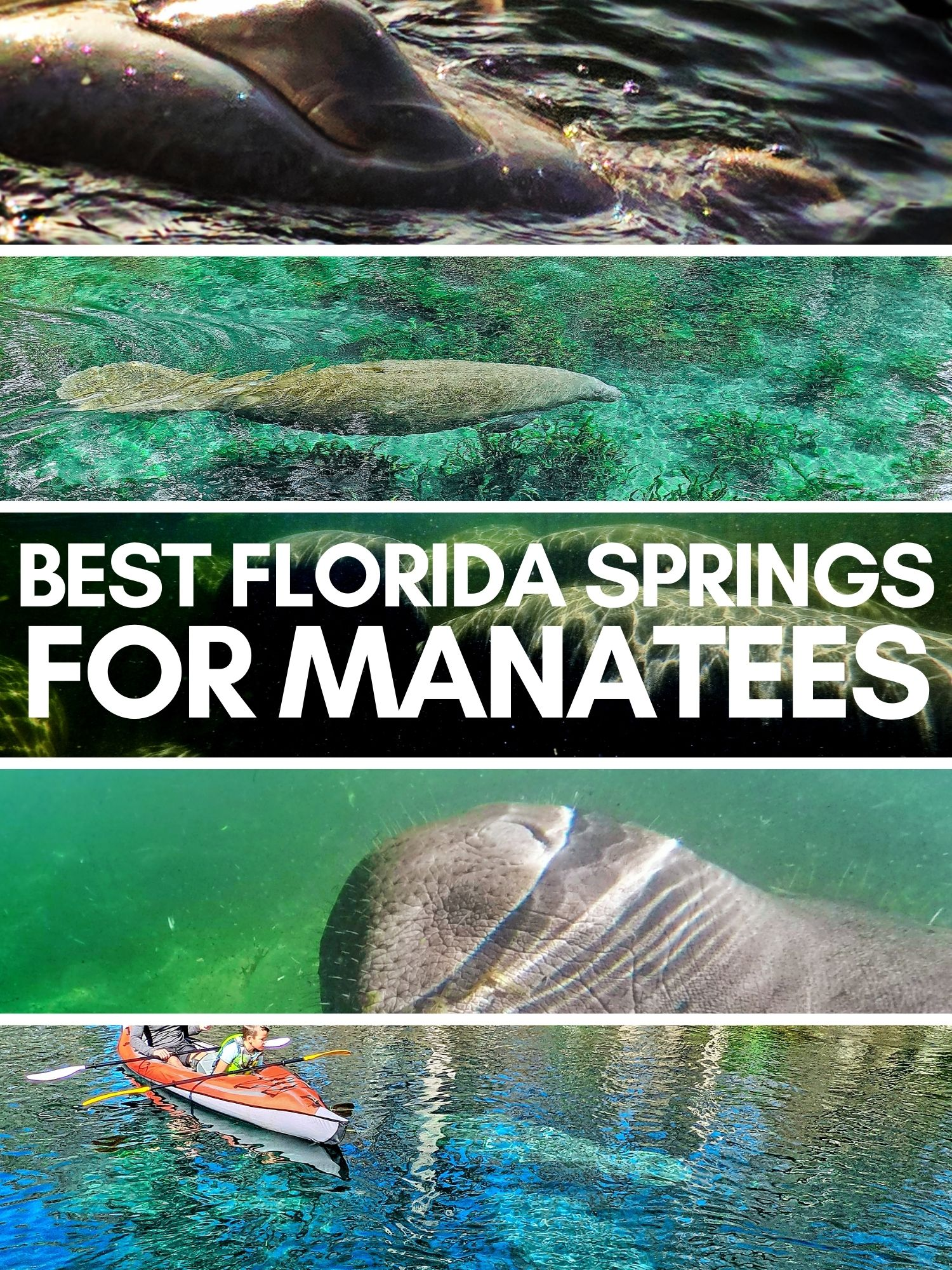 Manatees are a Florida bucket list experience. These are the best fresh water springs to see manatees up close and enjoy crystal clear waters any time of year.