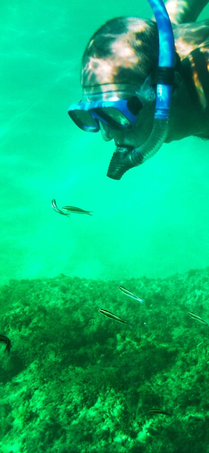 Underwater view while snorkeling in Cabo San Lucas