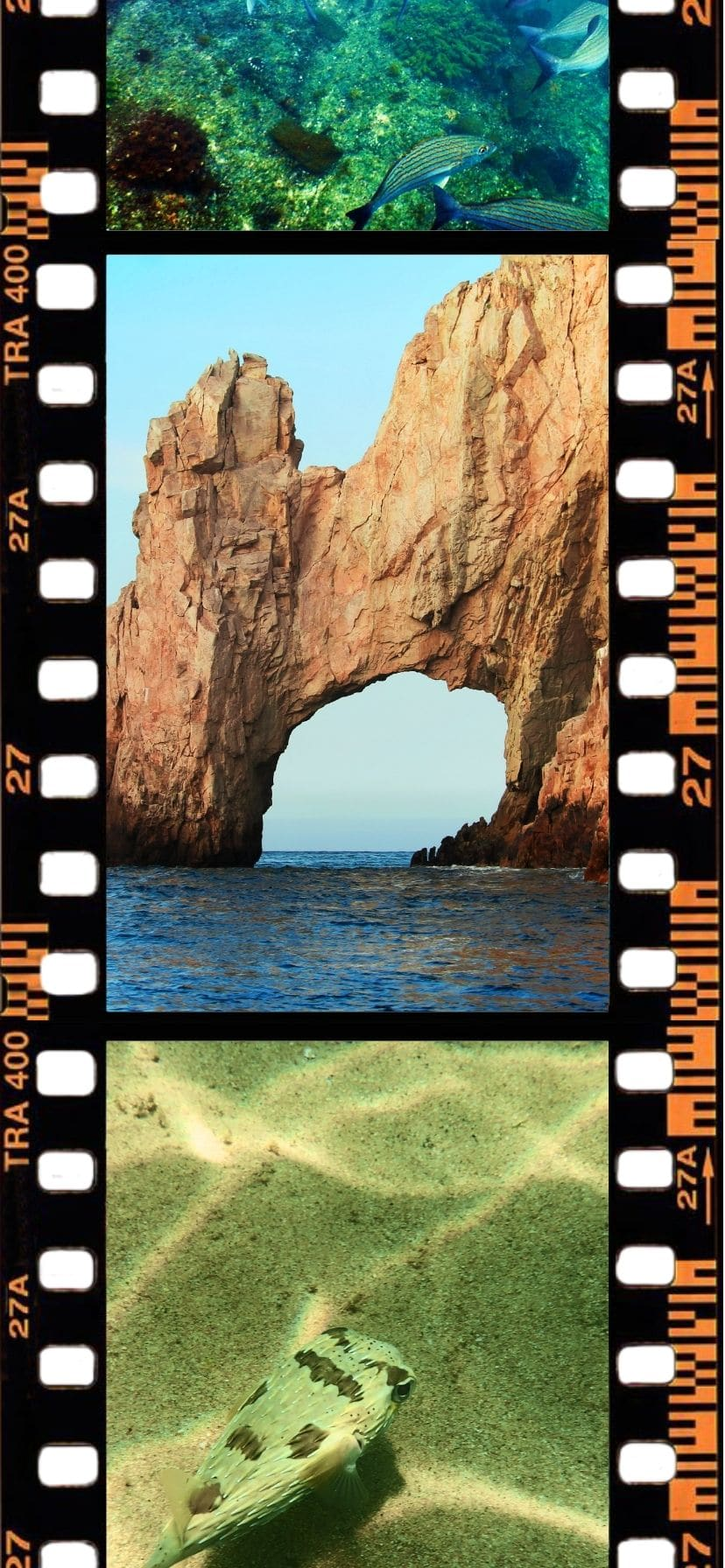 The Arch at Cabo San Lucas, snorkeling spots in Cabo
