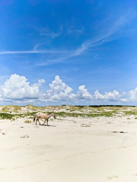 Wild Horse on Beach at Cumberland Island National Seashore Coastal Georgia 5