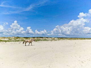 Wild-Horse-on-Beach-at-Cumberland-Island-National-Seashore-Coastal-Georgia-6-320x240.jpg