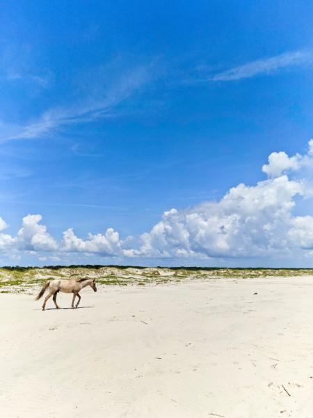 Wild Horse on Beach at Cumberland Island National Seashore Coastal Georgia 7