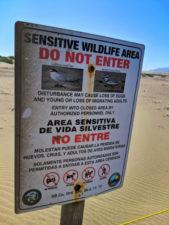 Wildlife-sign-at-Guadalupe-Nipomo-Dunes-Preserve-Santa-Maria-Valley-California-7-169x225.jpg